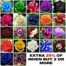 Rose Seeds Garden Flower Plant multi coloured 22 Different Colours UK Selller