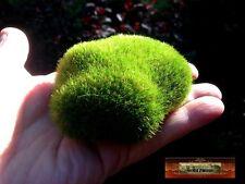 M00010 MOREZMORE 1 Artificial Fake Faux Emulation Moss Fuzzy Stone Ball Rock T20