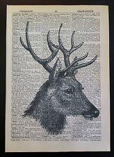 VINTAGE CIERVO Cabeza de impresión original Diccionario Página libro arte mural