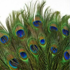 """10""""-12"""" Natural Peacock Tail Feathers DIY for Craft Art Home Wedding Decor UK"""