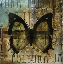 """""""Polyurabutterfly II"""" by Patricia Pinto 20x20"""" Reproduction"""