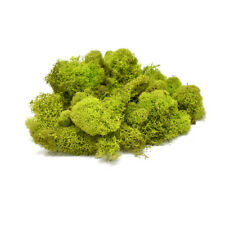 Naturally Preserved Reindeer Moss, Chartreuse, 4oz