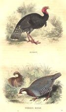 POULTRY. Order Fowl. Turkey; Perdrix Rouge 1873 old antique print picture
