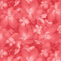 CATALINA Lt Red Tonal Blossoms Quilt Fabric by 1/2 yd #8406-PR Maywood Studio