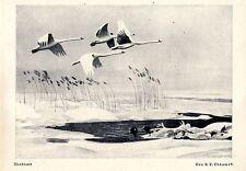 K. F. Olszewski * Nordland *Jagdliche Grafik * Kunstdruck