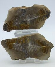 More details for detailed fossil  fern  pos/neg nodules mazon creek illinois usa + stands