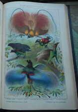 Originaldrucke (1800-1899) aus Südamerika mit Lithographie