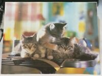 Postcard Animal Cat Trio of Kittens - posted 1997