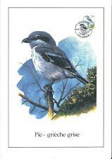 FDC 2775 - Oiseau Buzin sur gravure format A4 !