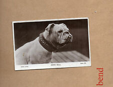 Real Photographic (RP) Collectable Animal Postcards without Country
