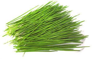 BIO Weizen (9,99€/1kg) Keimsaat Samen Keimsprossen Weizengras Sprossensaat 1kg