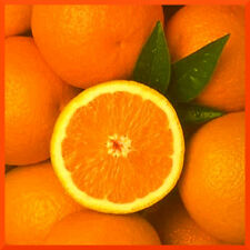 10 mL Fragrance Oil Scent Concentrate ❀ Candle Making Soap Bath Bomb ❀ Orange