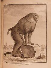 1766 Buffon Natural History ANIMALS Illustrated MONKEY Primate Evolution Zoology