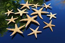 5 Broken Starfish Sea Shells, Natural Beach Seashells. Craft, display