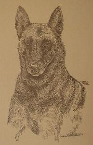 Belgian Malinois Dog Art Portrait Print 93 Kline adds dog name free WORD DRAWING