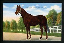Horse Racing postcard War Admiral in Kentucky KY linen Kropp