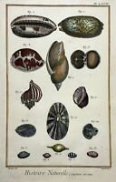 1780 Martinet - SEA SHELL Coquilles a hand coloured large folio 38 cm engraving