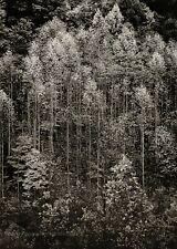 1948/72 Vintage ANSEL ADAMS Autumn Trees Smoky Mountains Landscape Photo 11X14