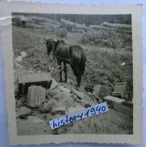 Foto KARMELAVA - LITAUEN zerbombte Stellung mit Überreste.