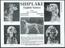 ENGLISH SETTER DOG WORLD VINTAGE 1955 SHIPLAKE BREED KENNEL ADVERT PRINT PAGE