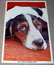 I've Been A Bad Boy Beagle Puppy Dog Poster 1976 Dargis