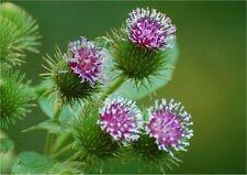 Detox Herbal Herbs&Resins