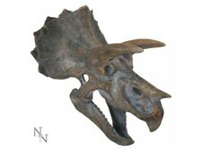Triceratops Skull Head 23cm Dinosaur Wall Art Hanging Plaque Nemesis Now