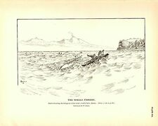 Rare 1887 Antique Fisheries Fish Print ~ The Whale Fishery Collection #3