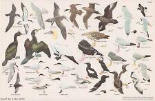 RSPB - Bird Cards - 1960 - N.W.CUSA . Chart N° 5 - 325X210