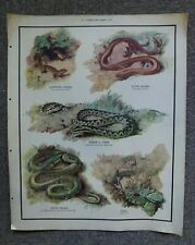 ORIGINAL Vintage School Nature Education Untrimmed Poster No 22 Lizards & Snakes