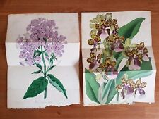 Botanical Prints 1837 Holden Del Smith hand coloured Lithograph