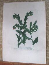 "Vintage Engraving,CARINTHE MACULATA,C.1740,WEINMANN,Botanical,20x13.5"",Mezzotint"