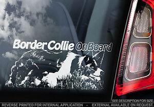 English Border Collie - Car Window Sticker - Scottish Sheep Dog Sheepdog - TYP2