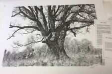 Paul Calle LANDMARK TREE--black/white -- 1980 MPP L# Ed of 950  NIF/COA Rare
