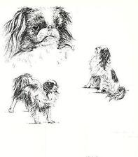Japanese Spaniel Chin - 1963 Vintage Dog Print - Matted *