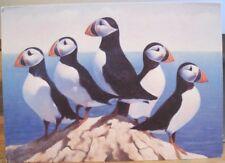 Vintage Art Postcard PUFFINS Painting JAMES TENNISON Argus Allen TX 4x6