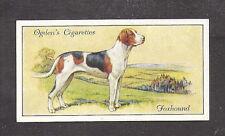 1936 Uk Dog Art Full Body Study Portrait Ogden's Cigarette Card English Foxhound