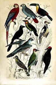 2 x Natural History Prints 19th Century Birds, Toucan, Parrots Pictures Reprints