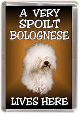 """Bolognese Dog Fridge Magnet """"A VERY SPOILT BOLOGNESE LIVES HERE"""" by Starprint"""