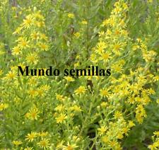 S'Olivarda - Altabaca - Mosquera - Dittrichia viscose - 1200 graines frescas