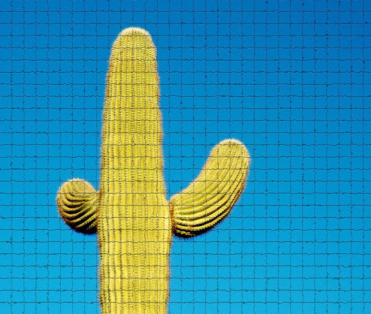 cactuscas