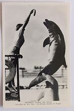 Rppc postcard Theater Of The Sea, Buttons Leaves The Water, Porpoise Dolphin, Fl