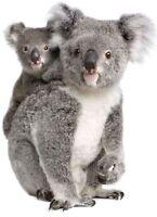 ASticker decal wall fridge children room animal decorate koala australia baby