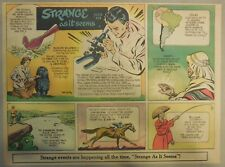 Strange As It Seems: Champion Obedience Dog, Horse Racing by Hix from 1951