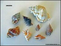 Chorus Of Frog Shells We're Soliciting Is A Bursa Bonanza, Riveting & Ribetting!