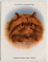 Breeds of Cats - Long Haired Red Tabby Persian Cat Feline 1930s Ad Trade Card