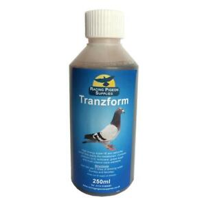 Tranzform 500ml - for Racing Pigeons helps recovery