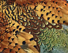 Pheasant Full Skin 2 Wings Saddle Rump Tail Feathers A+ Fly Tying Fly Fishing