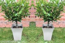 2x Large COFFEE Milano Tall Planters Square Plastic Garden Flower Plant Pots