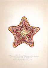 Ocean sea BISCUIT STARFISH original handworked limited edition signed art print